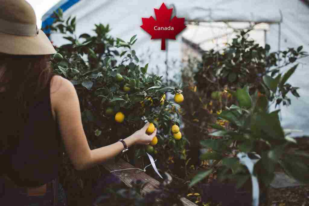 agriculture visa for Canada