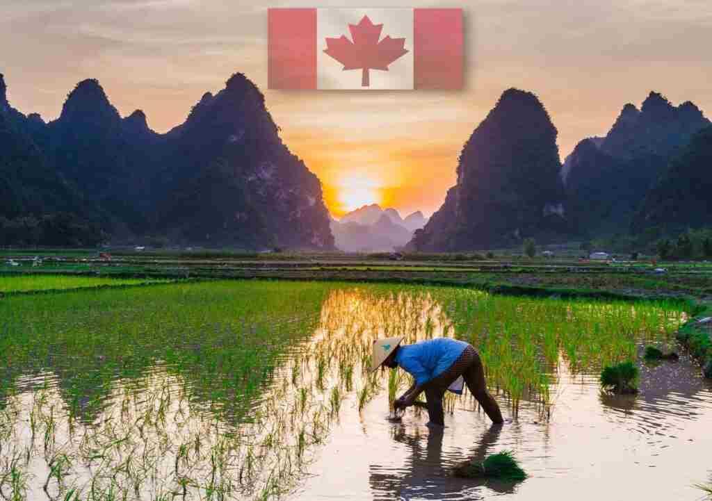 harvesting labor canada